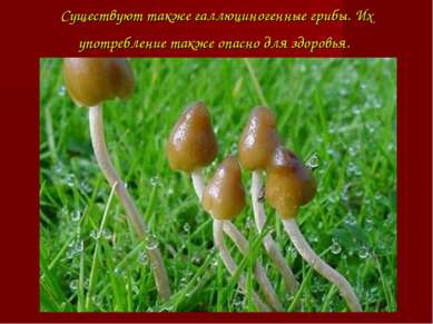Существуют такжегаллюциногенные грибы. Их употребление также опасно для здор...
