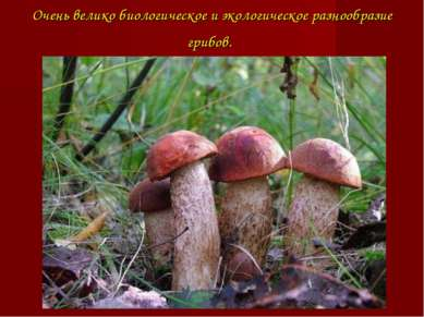 Очень великобиологическоеи экологическое разнообразие грибов.