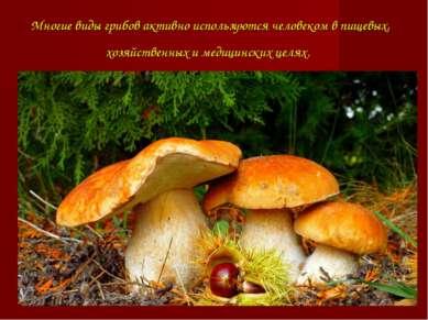 Многие виды грибов активно используютсячеловекомв пищевых, хозяйственных и ...