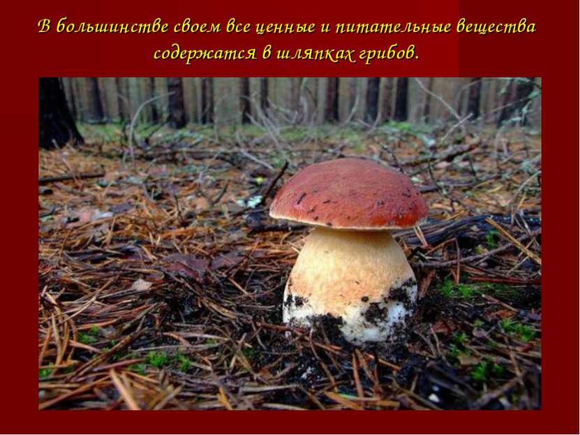 В большинстве своем все ценные и питательные вещества содержатся в шляпках гр...