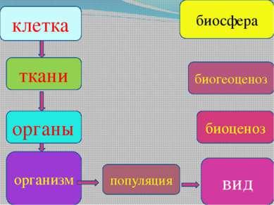 клетка органы популяция вид организм ткани биоценоз биогеоценоз биосфера