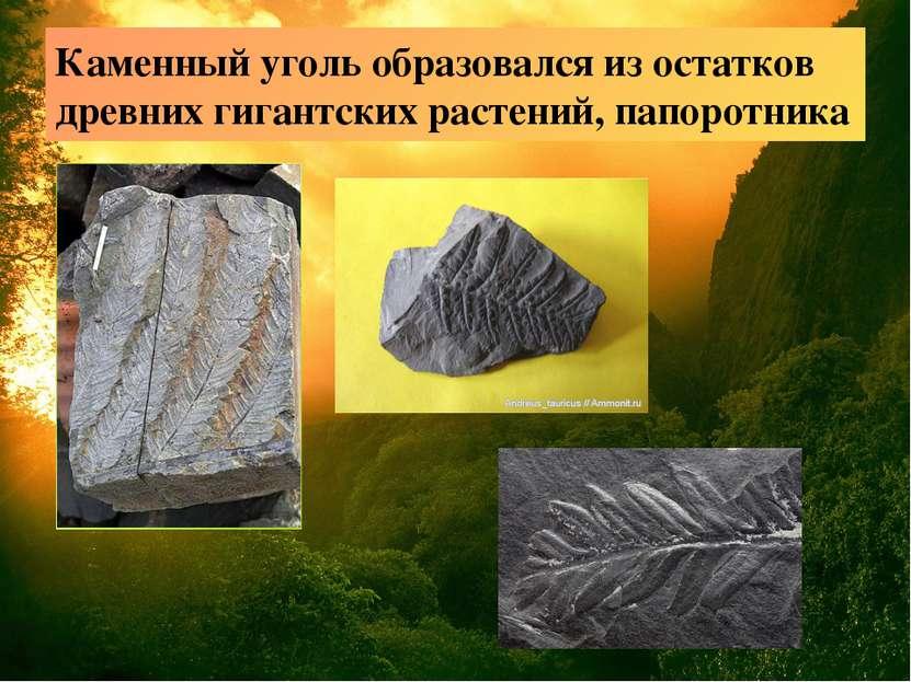 Каменный уголь образовался из остатков древних гигантских растений, папоротника