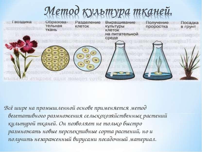 Всё шире на промышленной основе применяется метод вегетативного размножения с...
