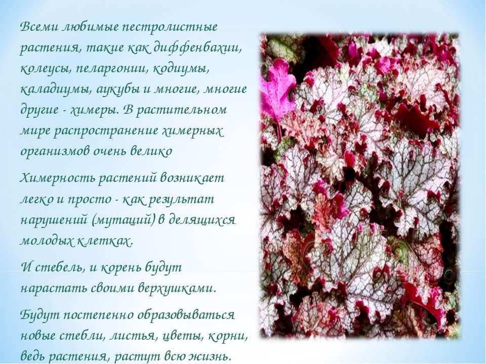 Всеми любимые пестролистные растения, такие как диффенбахии, колеусы, пеларго...