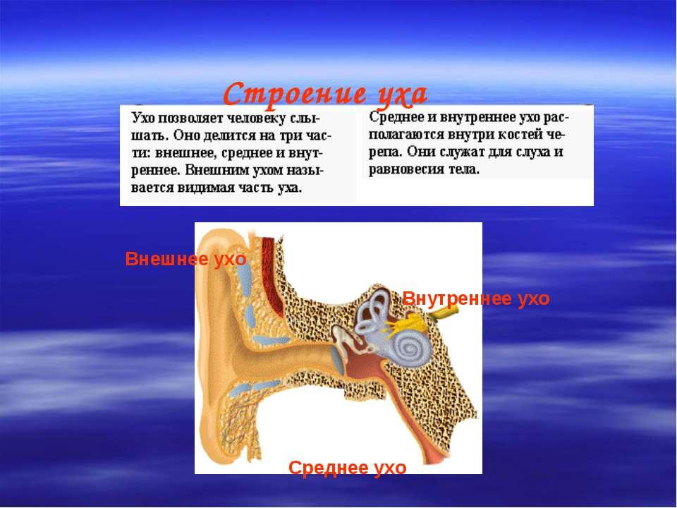 Внешнее ухо Внутреннее ухо Среднее ухо Строение уха