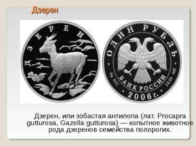 Дзерен Дзерен, или зобастая антилопа (лат. Procapra gutturosa, Gazella guttur...