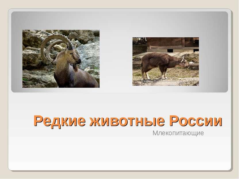Редкие животные России Млекопитающие