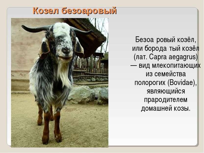 Козел безоаровый Безоа ровый козёл, или борода тый козёл (лат. Capra aegagrus...