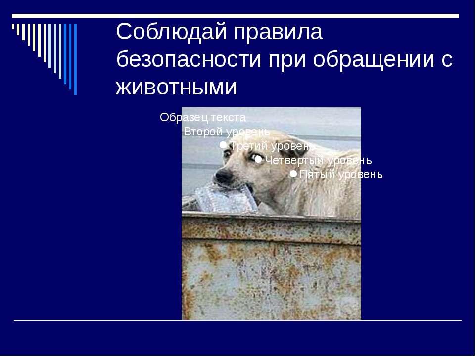 Соблюдай правила безопасности при обращении с животными