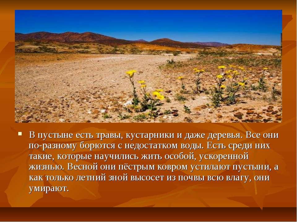 В пустыне есть травы, кустарники и даже деревья. Все они по-разному борются с...