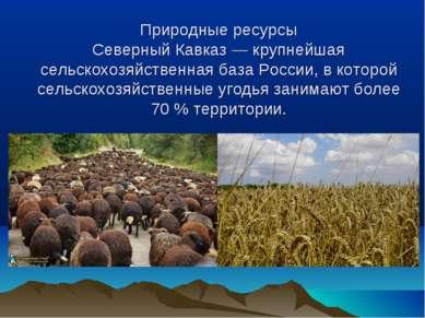 Природные ресурсы Северный Кавказ — крупнейшая сельскохозяйственная база Росс...