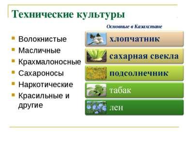 Технические культуры Волокнистые Масличные Крахмалоносные Сахароносы Наркотич...