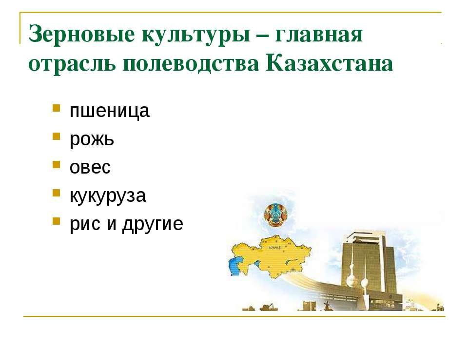 Зерновые культуры – главная отрасль полеводства Казахстана пшеница рожь овес ...