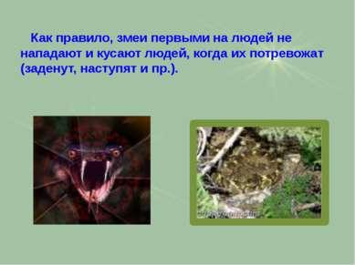 Как правило, змеи первыми на людей не нападают и кусают людей, когда их потре...
