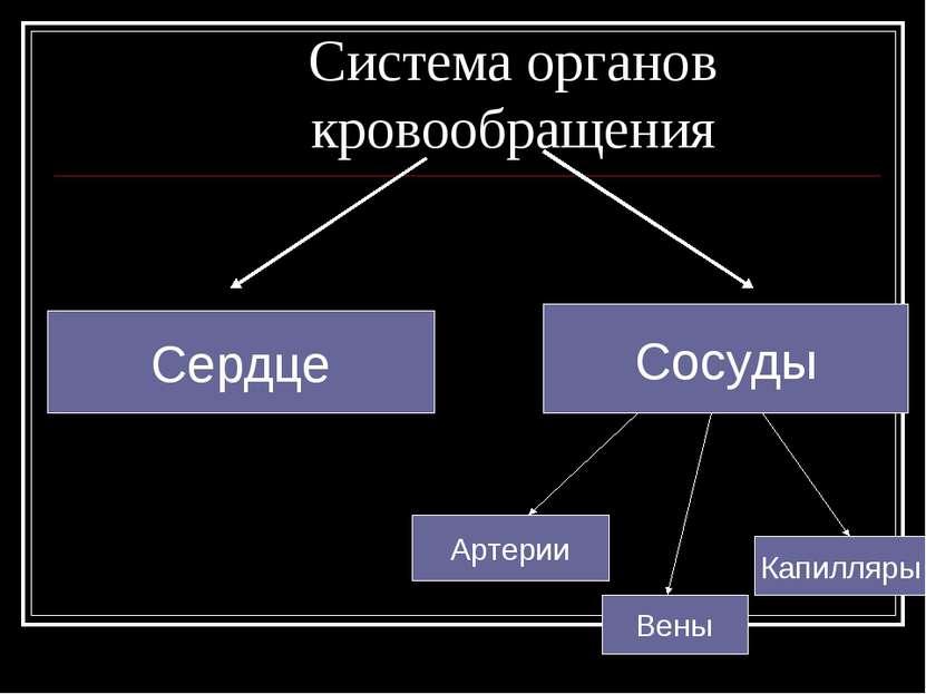 Система органов кровообращения Сердце Сосуды Артерии Вены Капилляры