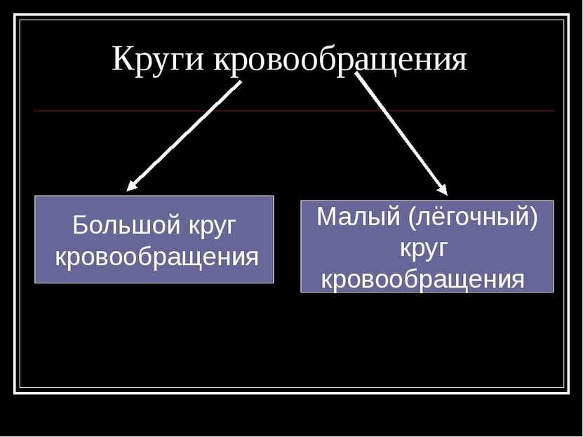 Круги кровообращения Большой круг кровообращения Малый (лёгочный) круг кровоо...