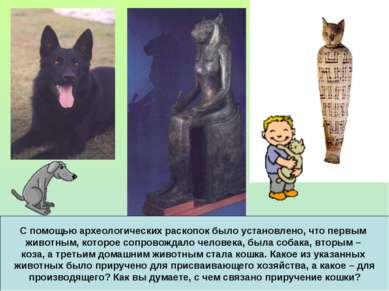 С помощью археологических раскопок было установлено, что первым животным, кот...