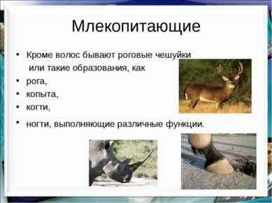 Млекопитающие Кроме волос бывают роговые чешуйки или такие образования, как р...