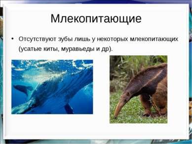 Млекопитающие Отсутствуют зубы лишь у некоторых млекопитающих (усатые киты, м...