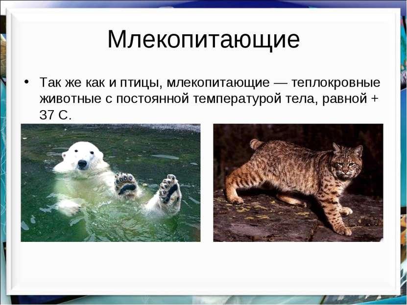 Млекопитающие Так же как и птицы, млекопитающие — теплокровные животные с пос...