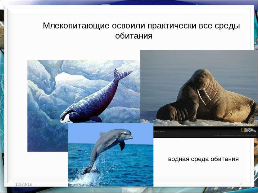 * * http://aida.ucoz.ru Млекопитающие освоили практически все среды обитания ...