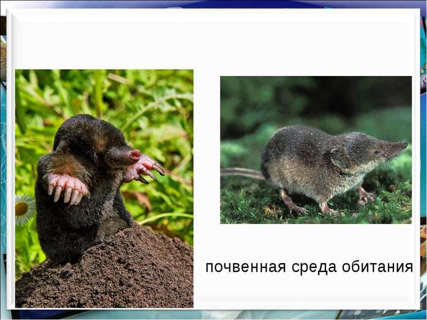почвенная среда обитания http://aida.ucoz.ru