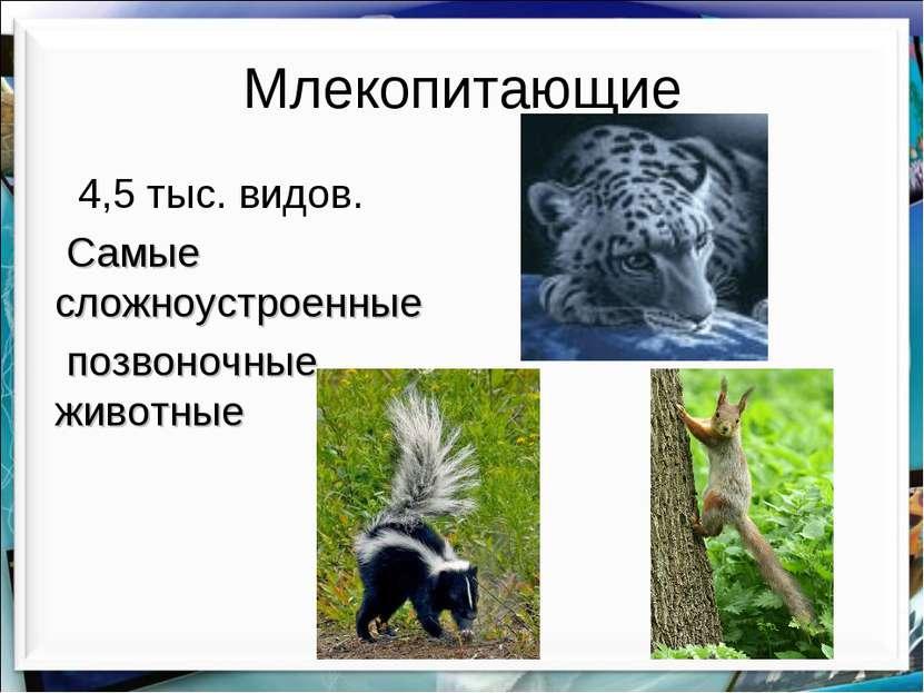 Млекопитающие 4,5 тыс. видов. Самые сложноустроенные позвоночные животные htt...