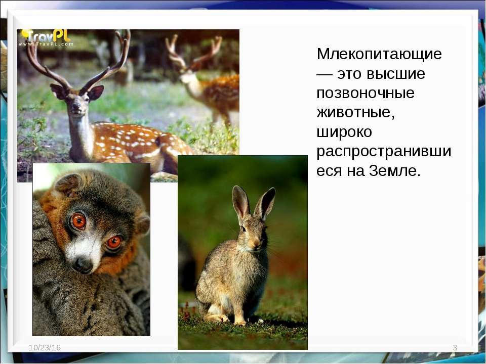 * * Млекопитающие — это высшие позвоночные животные, широко распространившиес...