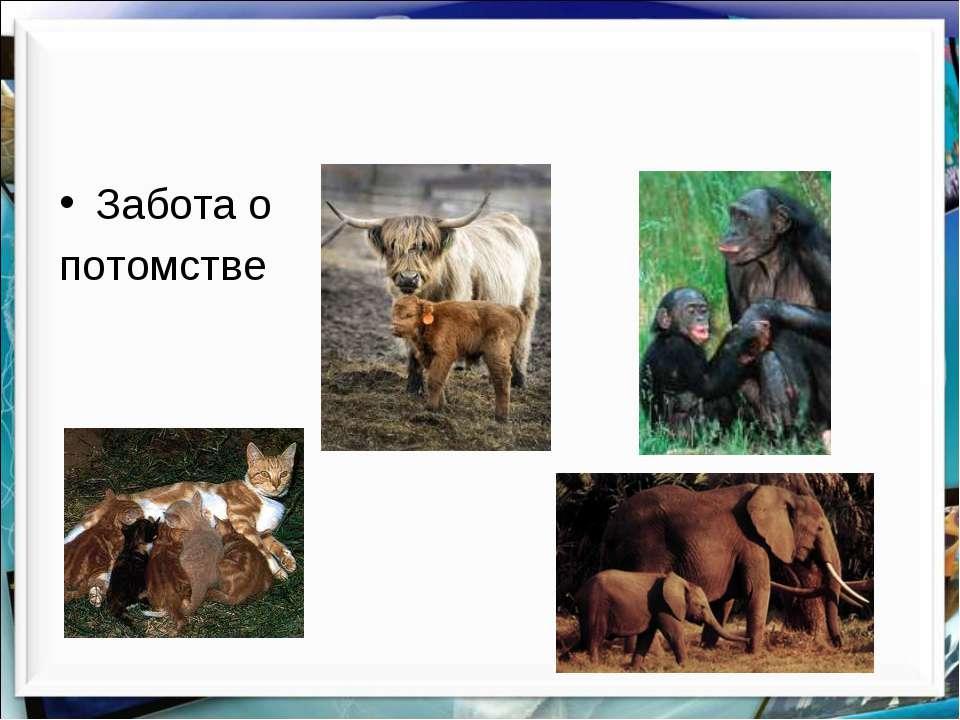 Забота о потомстве http://aida.ucoz.ru