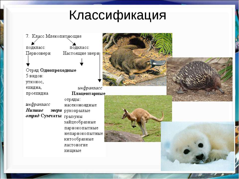 Классификация http://aida.ucoz.ru