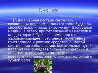 Бузина. Бузина черная исстари считалась священным деревом, ягоды которого буд...