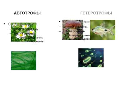 АВТОТРОФЫ ГЕТЕРОТРОФЫ