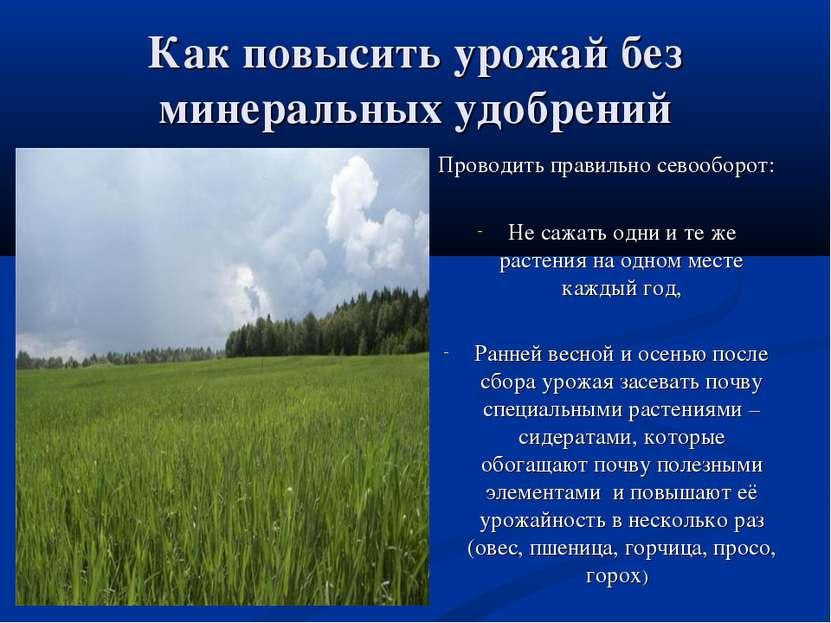 Как повысить урожай без минеральных удобрений Проводить правильно севооборот:...