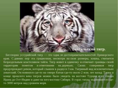 Бенгальский тигр. Бесспорно уссурийский тигр — это одна издостопримечательно...