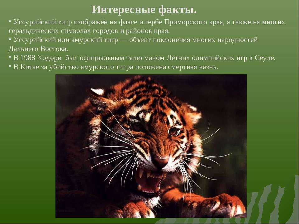 Интересные факты. Уссурийский тигр изображён на флаге и гербе Приморского кра...