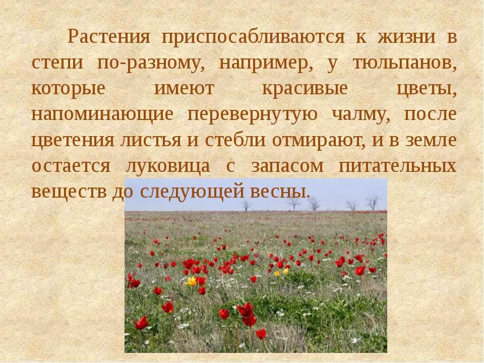 Растения приспосабливаются к жизни в степи по-разному, например, у тюльпанов,...