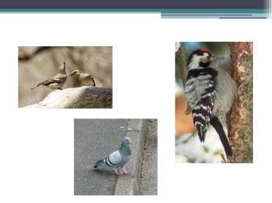 Гнездовые птицы
