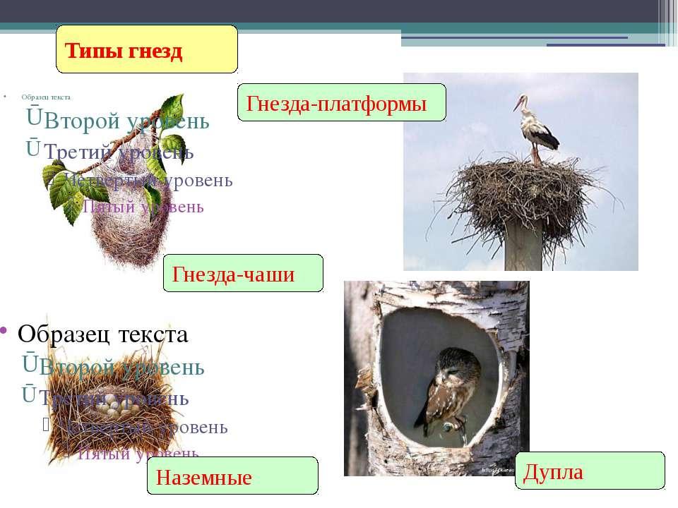 Гнездостроение Типы гнезд Наземные Гнезда-чаши Гнезда-платформы Дупла