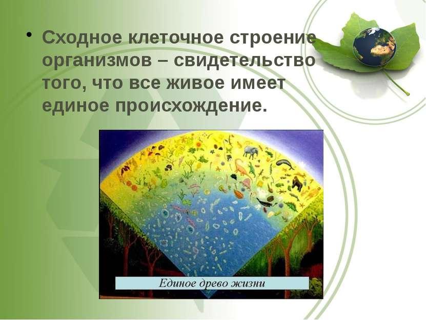 Сходное клеточное строение организмов – свидетельство того, что все живое име...