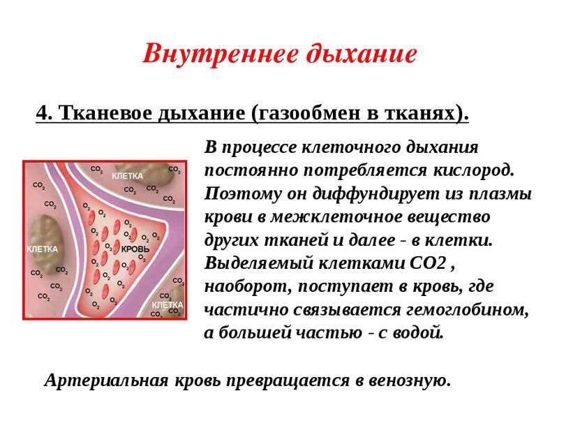 Внутреннее дыхание 4. Тканевое дыхание (газообмен в тканях). В процессе клето...