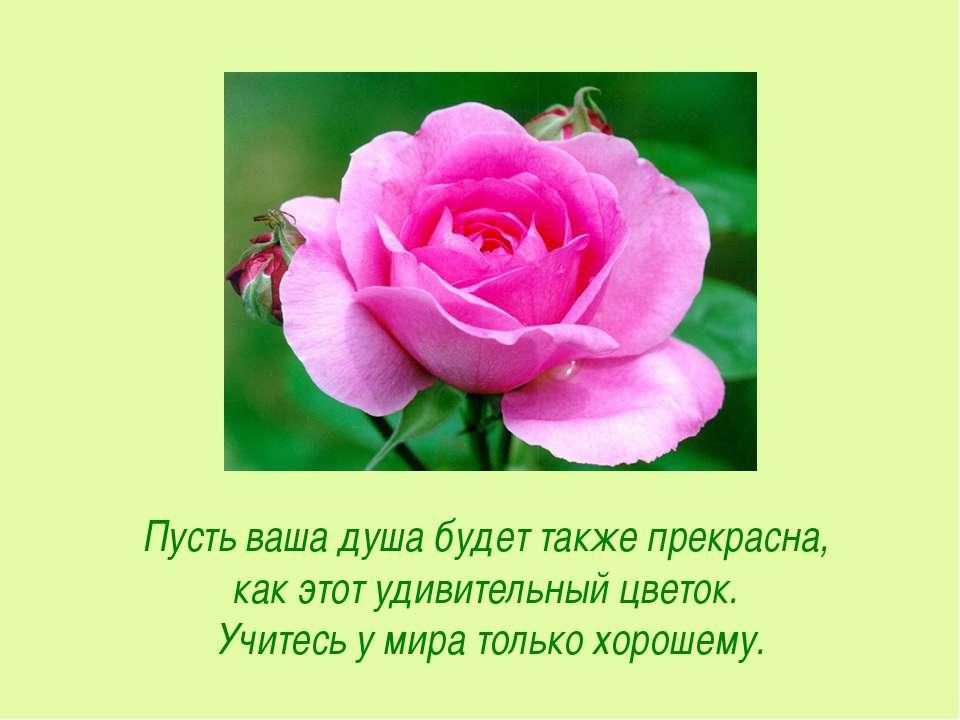 Пусть ваша душа будет также прекрасна, как этот удивительный цветок. Учитесь ...
