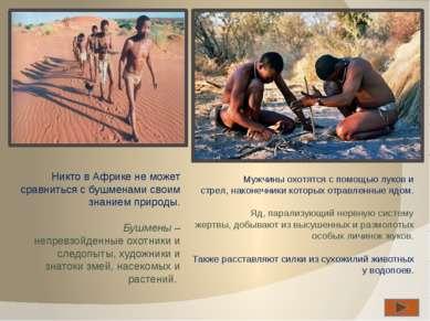 Никто в Африке не может сравниться с бушменами своим знанием природы. Бушмены...
