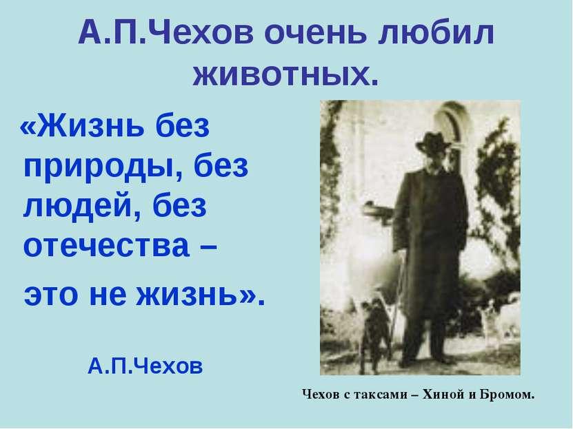 А.П.Чехов очень любил животных. «Жизнь без природы, без людей, без отечества ...