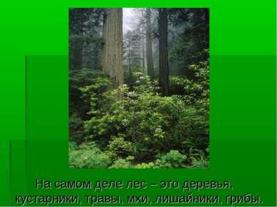 На самом деле лес – это деревья, кустарники, травы, мхи, лишайники, грибы.
