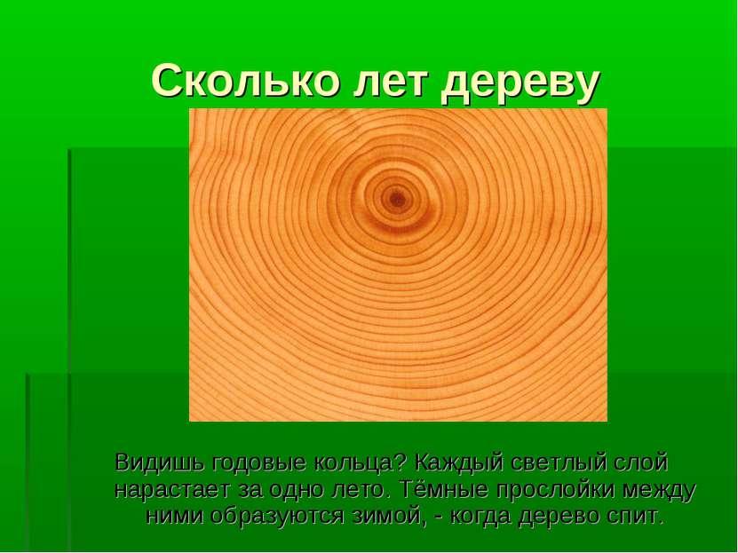 Сколько лет дереву Видишь годовые кольца? Каждый светлый слой нарастает за од...