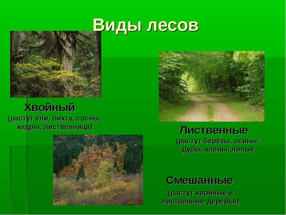 Виды лесов Хвойный Лиственные Смешанные (растут ели, пихта, сосны, кедры, лис...