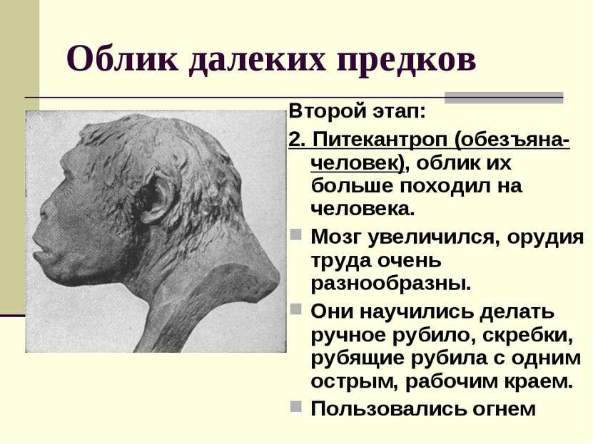 Облик далеких предков Второй этап: 2. Питекантроп (обезъяна-человек), облик и...