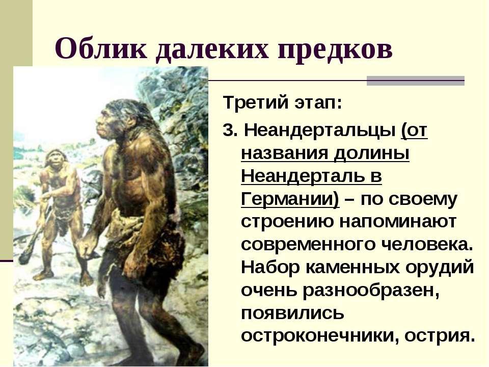 Облик далеких предков Третий этап: 3. Неандертальцы (от названия долины Неанд...