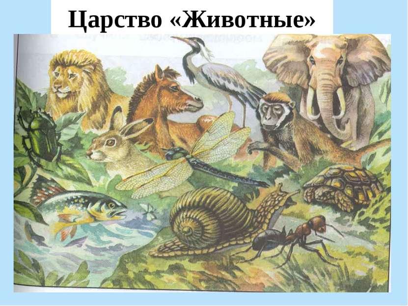 Царство «Животные»