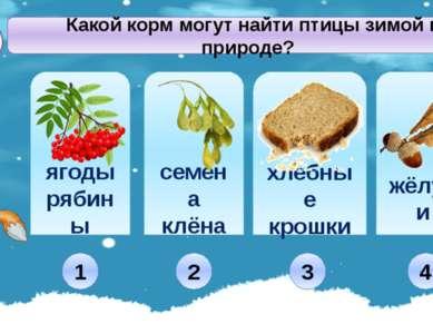 Какой корм могут найти птицы зимой в природе? С1 1 2 3 4 ягоды рябины семена ...